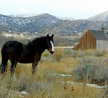 Horse and Barn by JoAnn Glennie