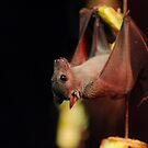 Fruit Bat by karlwilsonphoto