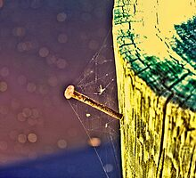 Rusty Nail With Spider Web by WeeZie