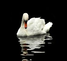 Swan reflections by AlysonArtShop
