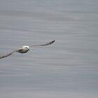 Gliding by Fiona MacNab