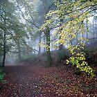 Misty Trail by thejourneysofar