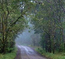 Misty Morning • Guy Fawkes River National Park • New South Wales by William Bullimore