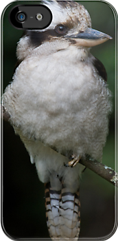 Kookaburra iPhone Case by Michael Eyssens