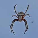 Spiders Otherside by Rick Playle