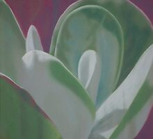 Plant Study - Succulent by Deb Fedeler