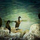 Cormorant dance by Lynn Starner