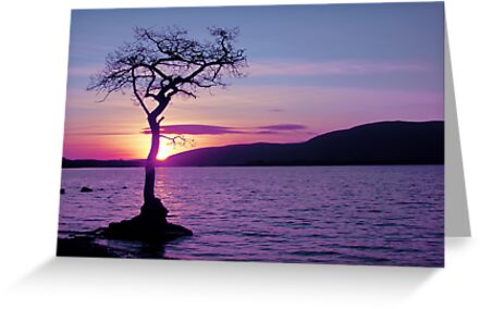 Don't let the Sun go down on Tree. by David Alexander Elder