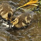 ugly ducklings by deville