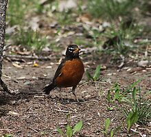 Robin by Alyce Taylor