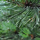 Water on Pine Needles by LESpiker