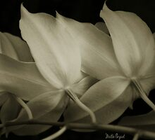 Orchid Backs in Black and nWhite by Mattie Bryant