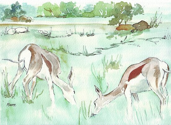 Sketching in the Game Reserve - Springbuck by Maree  Clarkson