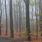 One misty morning... by Stephanie Owen
