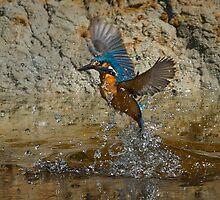 Kingfisher in flight by wildlifephoto