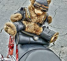 The bear rides on the bitch seat by Scott Mitchell