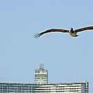 Pelican over Havana, Cuba by buttonpresser