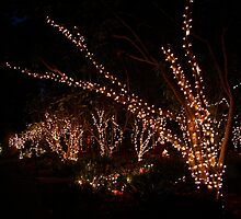 Holiday Lights at the Quail Botanical Gardens by Laurel Talabere