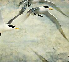 Take a Tern by Lynda Heins