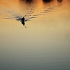 kayak at sunset by Pat Heddles