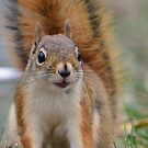 Happy Squirrel by Mully410