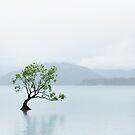 Tree in High Key by Neville Jones