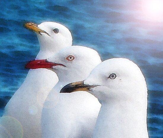 Three beaks by Maree Cardinale