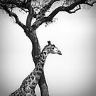 Africa Black &amp; White by javarman