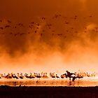 Flocks of flamingos at sunrise by javarman
