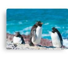 rockhopper penguins Canvas Print