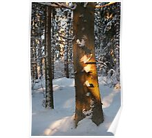 Forest in the winter Poster