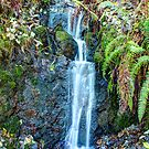 Cascading Down the Hillside by Dale Lockwood