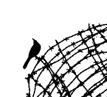 Bird on a wire by robigeehk
