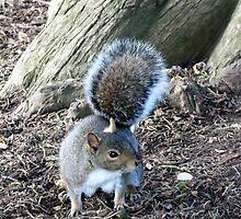 Cheeky Squirrel by Lynn Bolt