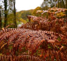 Autumnal Fern by SparklesDarkly