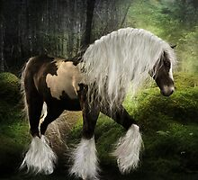 Gypsy Vanner by Shanina Conway