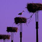 Stork in their nest at dusk by Eduardo Ventura