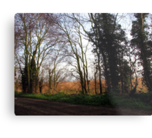 Tree Lined Track on a Winter's Morning Metal Print