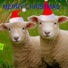 Merry Christmas - Lambs - NZ by AndreaEL