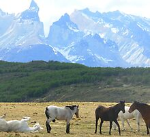 Chilean horses pasturing with Torres Del Paine mountainscape in the background by bethischeery
