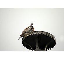 pigeon atop sculpture, luxembourg gardens,paris Photographic Print