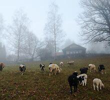 Sheep at Hometown by Daidalos