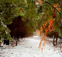 Winterfall.. by linmarie