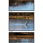 Fly Fishing Triptych with White Background by Steve Purnell
