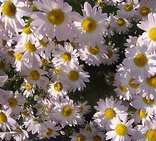 daisy patch by Peggy Burch