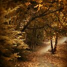 October Trail by Jessica Jenney