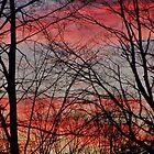 Autumn Sunset by joan warburton