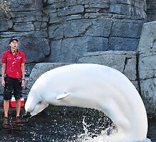 Beluga at Vancouver Aquarium by Aziz Dhamani