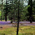 A forrest with sprinkles by MarthaBurns