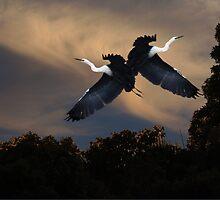 Heron Cry by byronbackyard